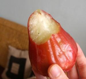 roseappe